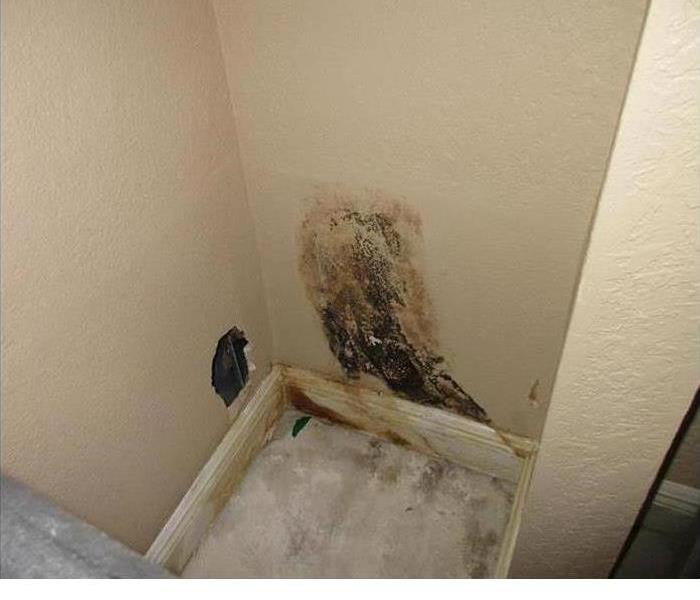 Mold Damage in Royal Palm Beach