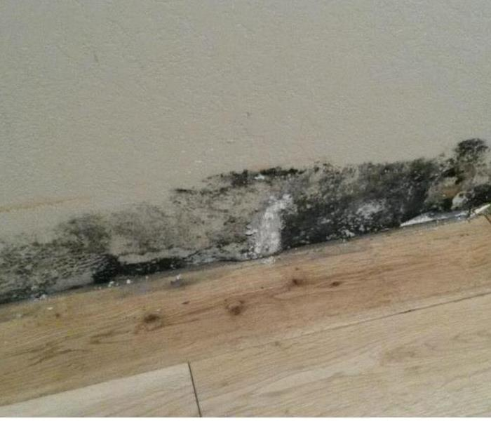 Mold Remediation Is There Mold Or Mildew in Your Palm Beach County Home?