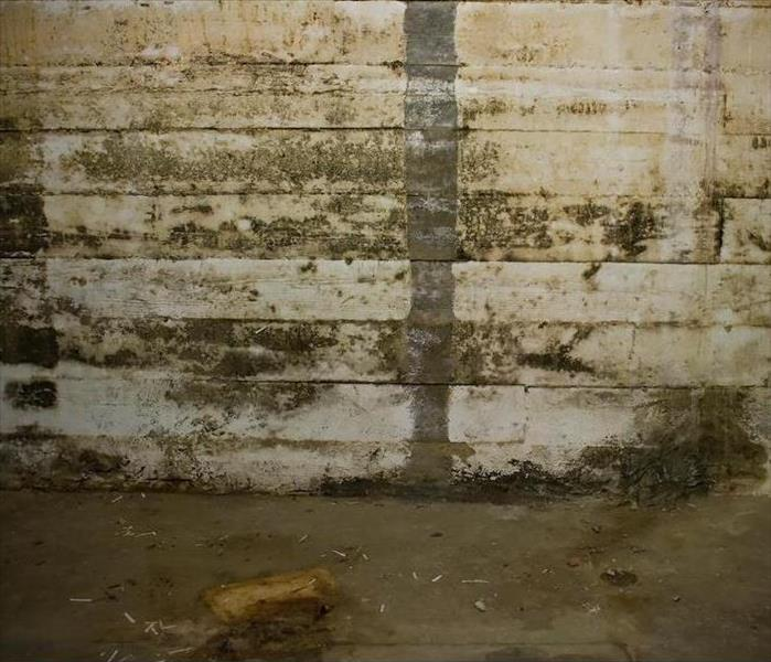Mold Remediation Odor Removal After Mold Damage in West Palm Beach Homes