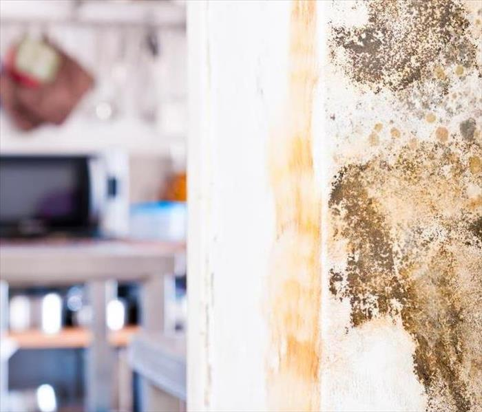 Mold Remediation Five Things to Know About Mold Damage in West Palm Beach