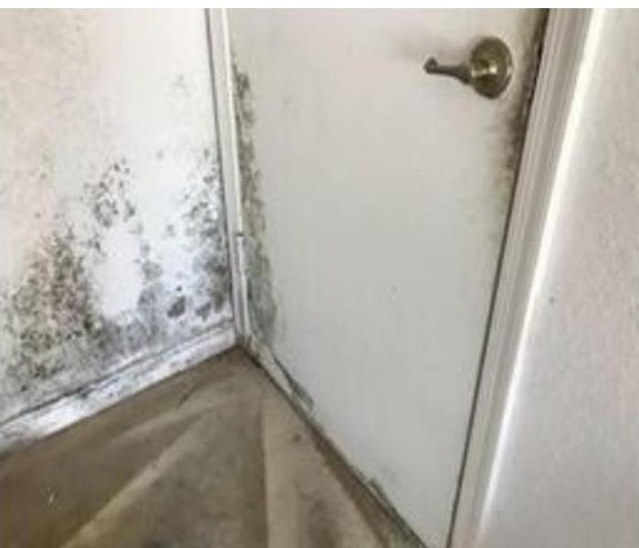 mold damage found on door, wall, and carpet